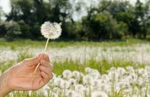 allergie stgionali, pollini